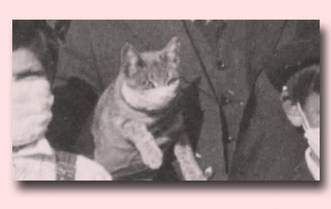 Cat in a flu mask from Dublin, California (1918)